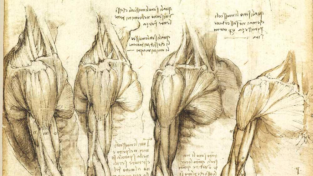 Анатомические зарисовки Леонардо да Винчи